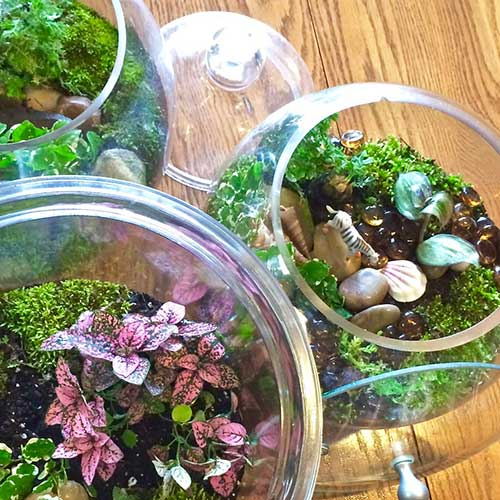 Terrariums Glass Gardens–madebybarb Hero