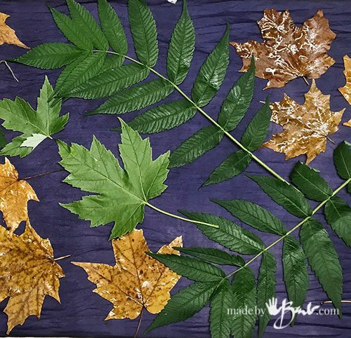 fresh green leaves on purple blue silk