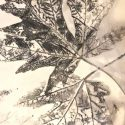 Tips For Great Eco Prints On Paper