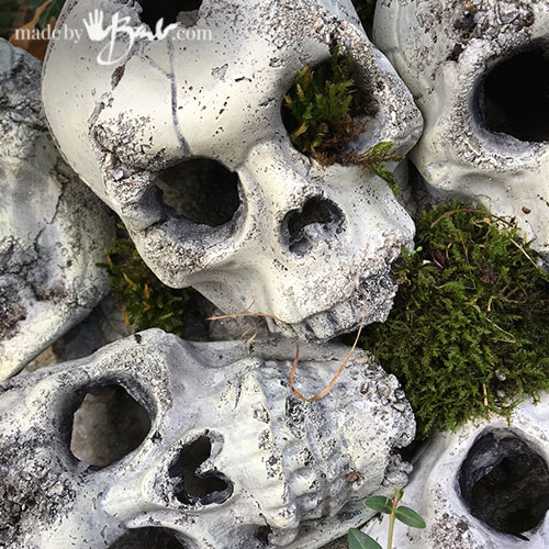 skulls in moss