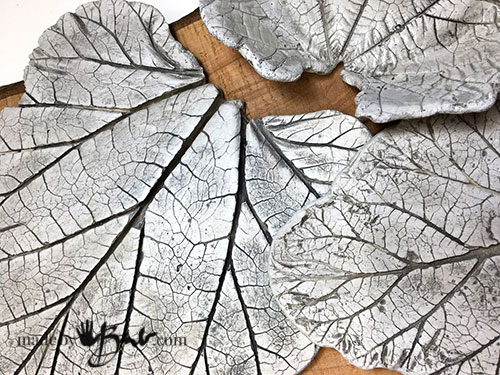 Large leaves accenting the vein patterns