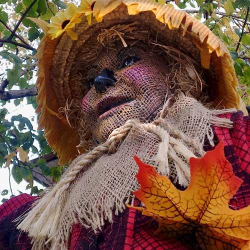 The Scarecrow – Wizard Of Oz Style